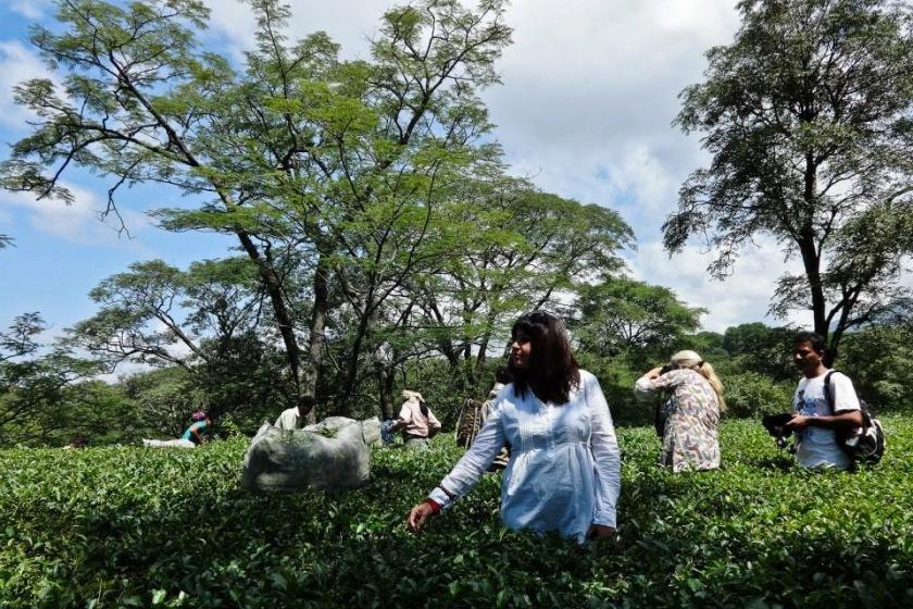 Dharamshala tea trail